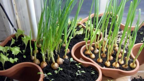 красивые гршки для выращивания пряностей