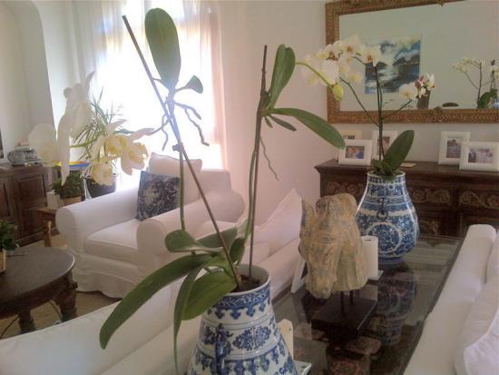 горшки для орхидеи