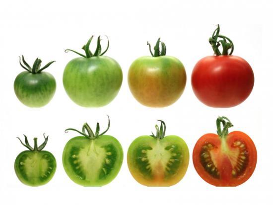 Степень спеловти томатов