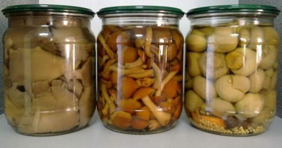 какие грибы можно консервировать