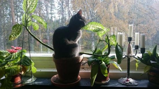 Как защитить цветы от кота, методы, безопасные для кошек и для растений