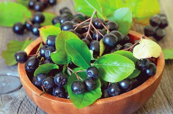 ягоырябины черноплодной