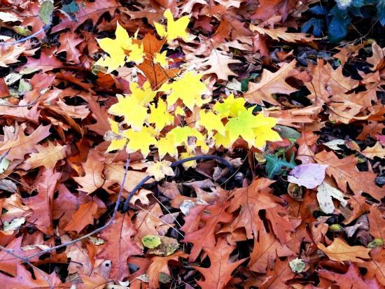 цвет листвы