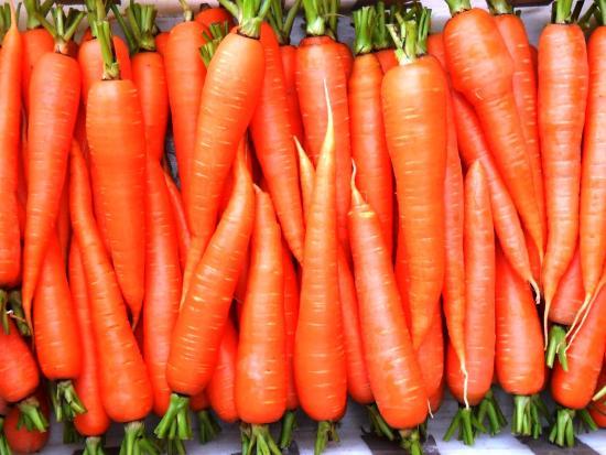 в чем польза моркови, что содержит продукт