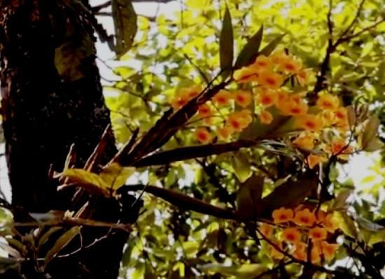 как размножаются орхидеи в природе