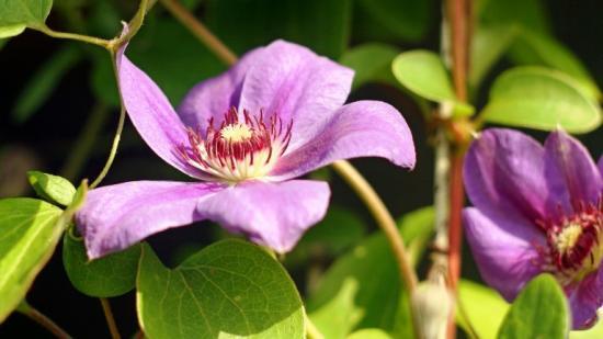 вегетационный период растений