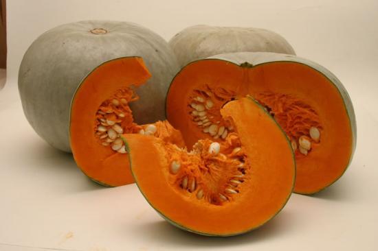 агротехника тыквы