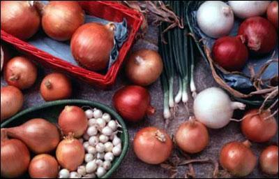 Как сажать лук севок на огороде