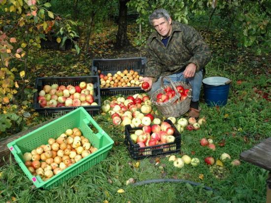 Приметы и суеверия садоводов и огородников