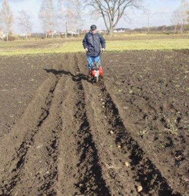 Как влияют сроки посадки картофеля на его качество и урожайность