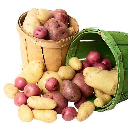 Картофель Ярла и его выращивание