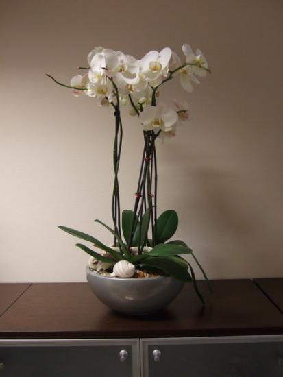 Орхидея после пересадки