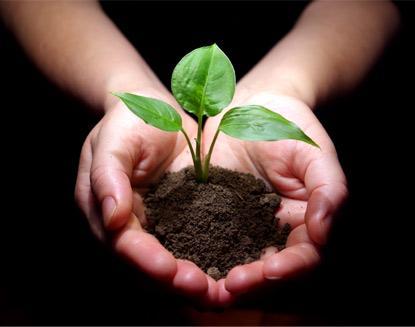Почва подготовленная