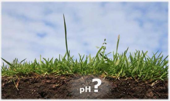 Кислотность почвы определение