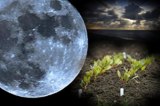 Влияние фазы луны на растения и рост