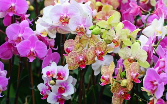 Орхидея  после удобрений