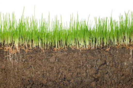 Растения после удобрений