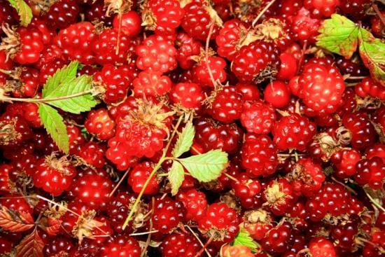 Княженика, плоды